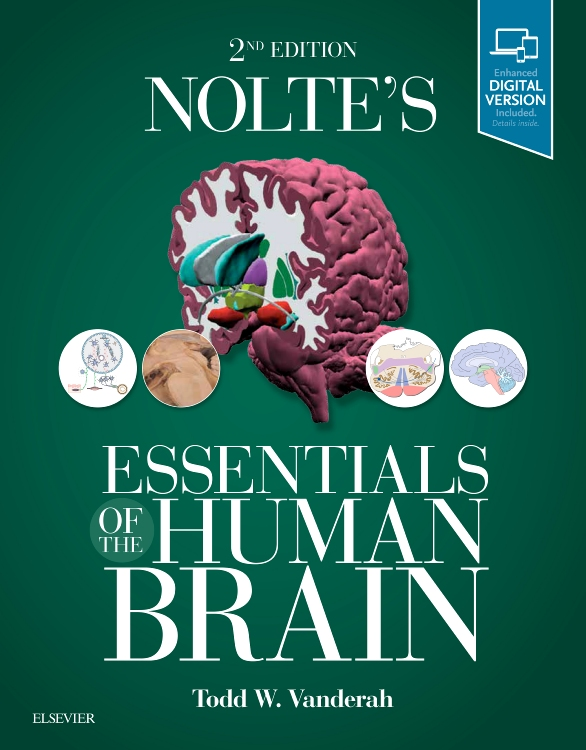 Nolte's Essentials of the Human Brain